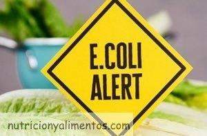 Bacteria E.coli. Síntomas, Prevención y Medidas de Higiene