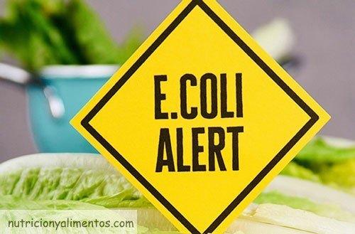 bacteria e coli y alimentacion
