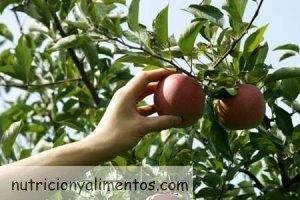 Frutas que maduran fuera del árbol, ¿cuáles son?