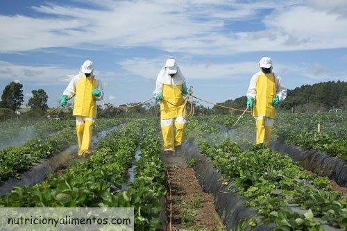 frutas y verduras contaminadas pesticida