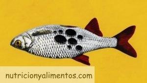 Mercurio en Pescado y Marisco